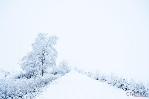 Mystic Winter.